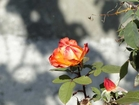 Luxury  hotel Secret Istria - Where roses bloom even in November